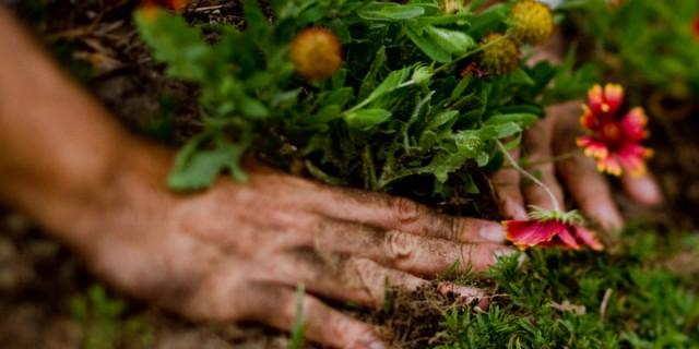 gardening-001-640x320.jpg